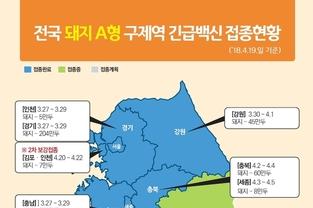 전국 돼지 A형 구제역 백신접종 21일까지 완료