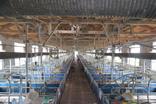 남은음식물 급여 돼지농가 담당관 지정…특별관리