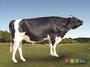 체형·우유 생산 능력 뛰어난 젖소 씨수소 4두 선발