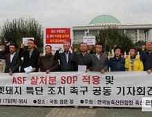 """축산단체 """"ASF 살처분 SOP 적용·멧돼지 소탕 특단조치"""" 촉구"""