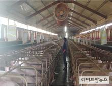 ASF 살처분·수매농가, 정책자금 무이자 2년 상환연장