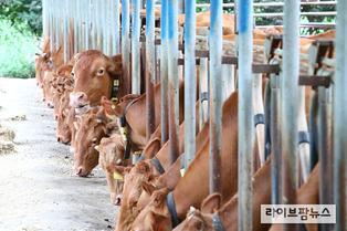 구제역 백신접종 미흡농가, 정책자금 지원 제한