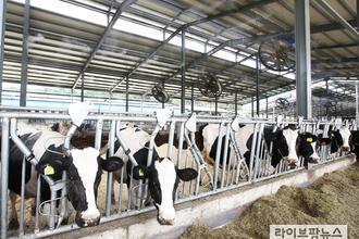 한·일정부 '코로나19 관련 낙농상황' 인식차이 뚜렷