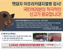 멧돼지 포획·울타리 보강…봄철 ASF 차단방역 총력