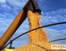 국제곡물가 연일 폭등세…사료·식품업체 금융지원·긴급통관 시행