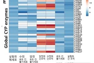 농진청, 동물 유래 '유도 간 줄기세포' 제작 기술 개발