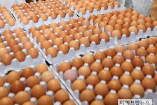 """""""혈세 731억원들여 계란수입했지만 여전히 '금계란'"""""""